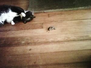Cat With Shrew