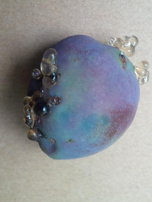 tiny fallen plum